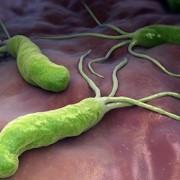 Hogyan védekezhetünk a Helicobacter pylori baktériummal szemben?
