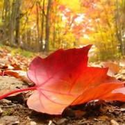 Jól készüljünk fel az őszre – természetes szerekkel