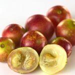 Camu camu, a rengeteg C-vitamint tartalmazó gyümölcs, a kép előterében egy kettévágott példány.