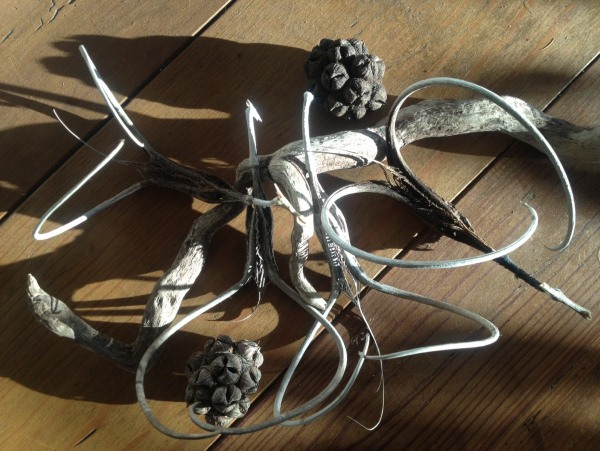 Afrikai ördögkarom virágának karomszerű termései.