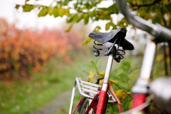 Régi piros kerékpár egy fa alatt, háttérben őszi táj.
