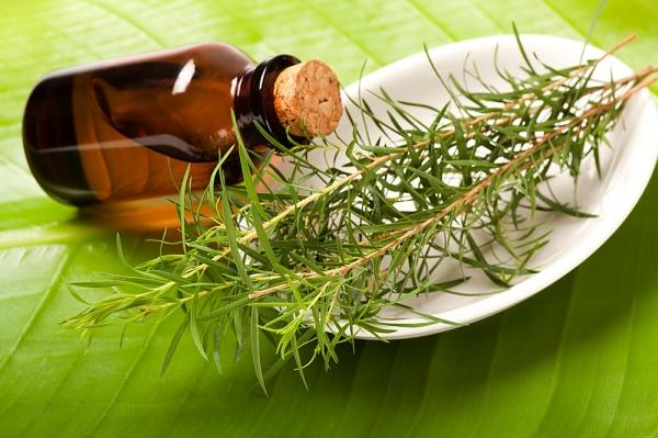 Zöld levélen ovális, fehér tálka, benne teafa ágai, mellette barna üvegcsében teafaolaj.