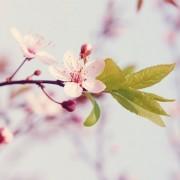 Segítsük szervezetünket a tavaszi megújulásban!