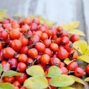 Vitaminban gazdag gyümölcsök testünk védelméért