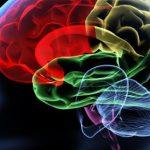 Sematikus rajz az emberi agy ábrázolásáról, pirossal jelölve a stroke lehetséges helyét.