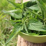 Frissen szedett csalánlevelek egy zöld tálba rakbva egy kerti faasztalon.