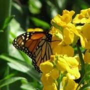 Miért van a növényeknek gyógyerejük?