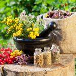 Különféle friss és szárított yógynövények mozsárban, üvegcsékben, zsákokban.