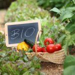 Méregtelenítés bioétrenddel
