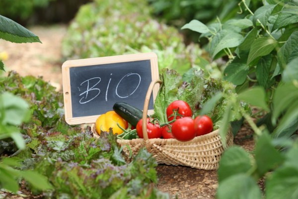 Frissen leszedett zöldségek egy kosárban a konyhakertben, mellette táblán BIO felirat, amely utal az ökogazdálkodásra.