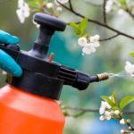 Gyümölcsfa kinyílt virágját permetezik.