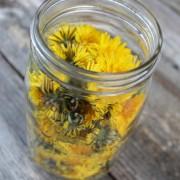Gyermekláncfű – gyomnövény helyett csodanövény