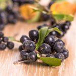 Erős antioxidáns a fekete berkenye
