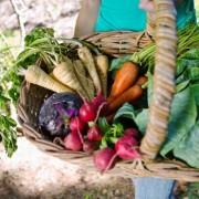 Több antioxidánst és kevesebb méreganyagot tartalmaznak a bioélelmiszerek