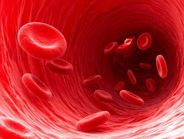 Vörösvértestek áramlása egy egészséges éren belül.