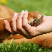 Új természetes terápia ízületi gyulladásra – kutyának és embernek