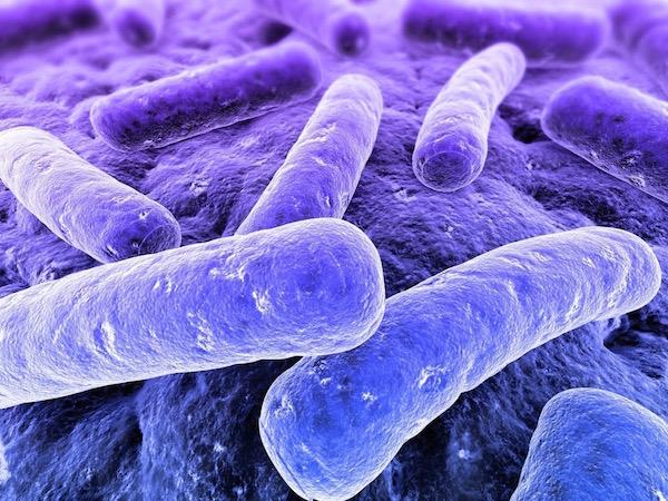 Clostridium okozta fertőzés nagyított képen.