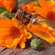 A sötét középkor egyik varázslatos gyógynövénye, a körömvirág