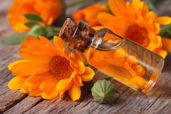Narancssárga körömvirág (Calendula officinalis) és a belőle készült olaj.