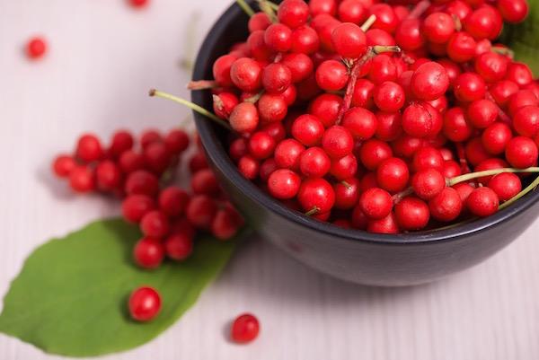 Kínai kúszómagnólia (Schisandra chinensis) piros termései egy tálban.