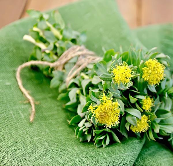 Illatos rózsásvarjúháj (Rhodiola rosea) sárga virágai spárgával egy csokorba kötve zöld terítőn.