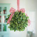 Egy ősi gyógynövény és karácsonyi dekoráció: fehér fagyöngy