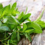 Borsmenta, egy frissítő és hűsítő gyógynövény