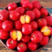 Acerola, a C-vitamin-bomba