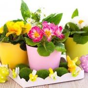 A kankalin: egy remek gyógyító és egy szemet gyönyörködtető dísznövény húsvétra