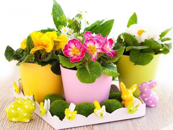 Színes cserepekben tavaszi kankalinok, mellettük hasonló színekben húsvéti nyuszik.