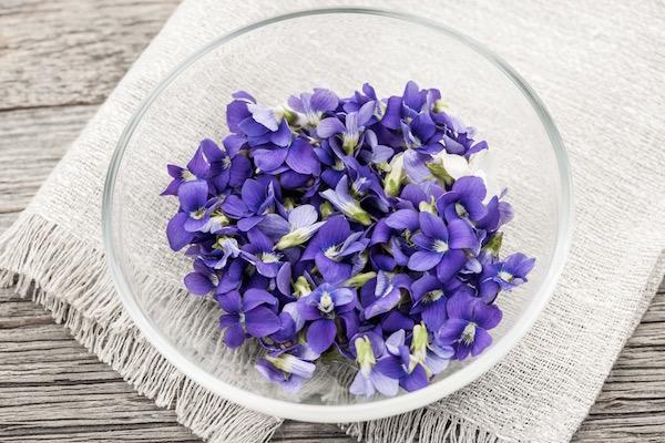 Frissen szedett lila ibolya virágai egy kis üvegtálban.