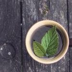 A testet és szellemet élénkítő erdeimálnalevél-tea
