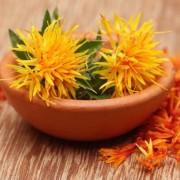 Egy festőnövény, amely gyógynövényként is funkcionál: sáfrányos szeklice