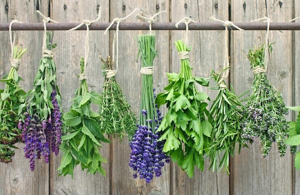 Tavaszi gyógy- és fűszernövények szárításra várva felakasztva egy rúdra.