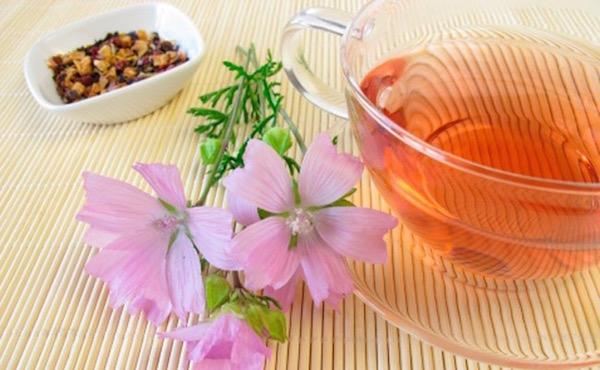 Orvosi ziliz gyökeréből készült tea gyomornyálkahártya-gyulladásra. A csésze mellett a gyógynövény virága és az aprított gyökere is.