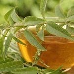Gyógynövények, amelyek elbánnak az aranyérrel