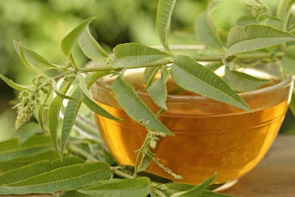 Az aranyér egyik belsőleg ható gyógyszere, a szennatea.