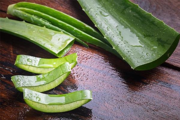 Frissen levágott Aloe vera levele felszeletelve.