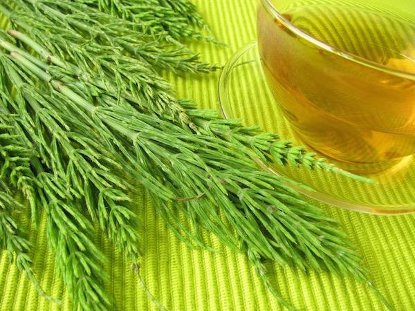 Neonzöld alátéten mezei zsurló és a belőle készült tea üvegpohárban.