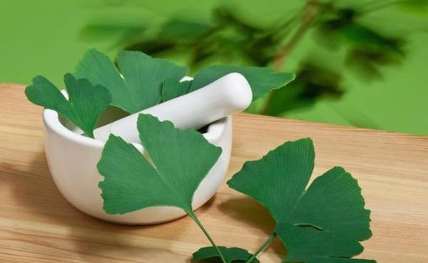 Ginkgo biloba legyezőszerű levelei egy kőmozsár mellett.