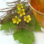 Vérontófűből készült tea és tinktúra