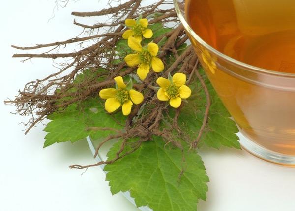 Vérontófű (Pontentilla erecta) és a belőle készült tea.