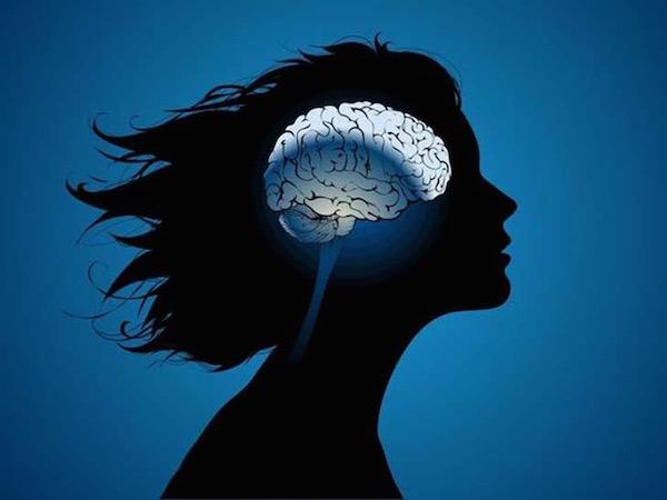 Női agy ábrázolása egy rajzon.