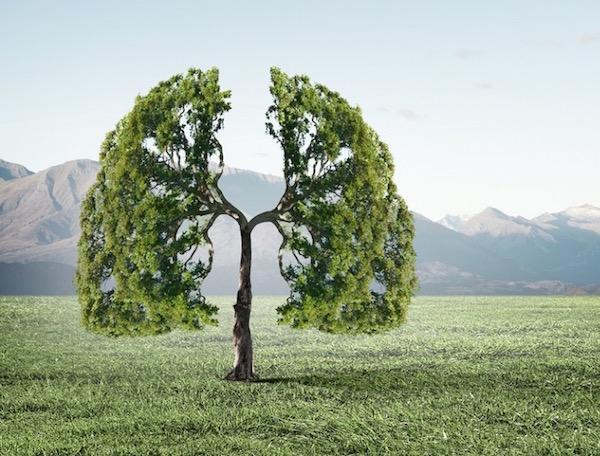 Egy tüdőt formázó fa kinn a természetben.