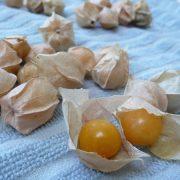 Egy szuper antioxidáns gyümölcs: perui földicseresznye