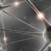 Néhány bioanyag az idegek és az agy számára