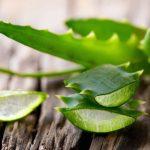A káprázatos Aloe vera, amely szemet gyönyörködtetővé varázsol