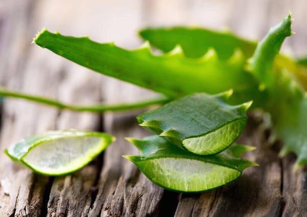 Aloe vera levele egészben és cikkekre vágva egy fadarabkán.