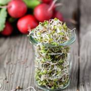 Tavaszi és téli vitaminbombák: kerti retek és retekcsíra