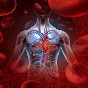 Vérkeringést javító gyógynövények